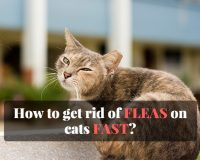 how to treat fleas on cats fast