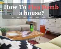 how to flea bomb a how