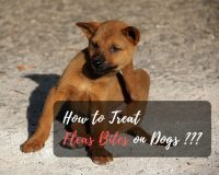 treat flea bites on dogs