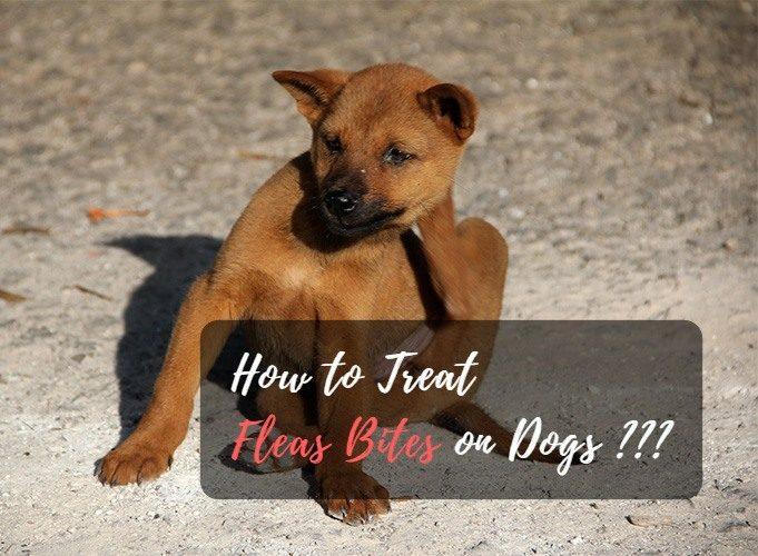 treat flea bites on dogs
