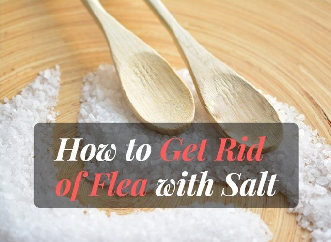 how to get rid of fleas with salt