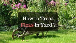 how to treat fleas in yard