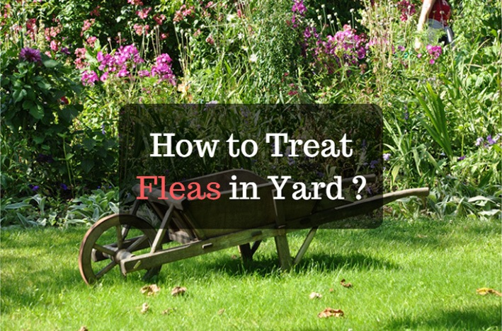 how to treat fleas in yard