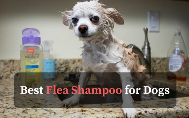 best flea shampoo for dogs