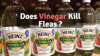 Does vinegar kill fleas