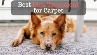 best flea treament for carpet