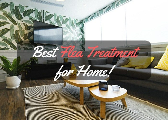 best flea treatment for home