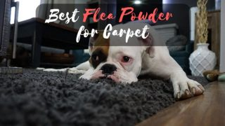 best flea powder for carpet